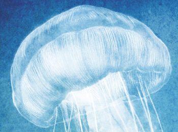 home-lo-que-sucedio-con-la-medusa
